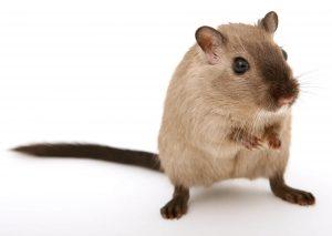 egerek szaga a szájból