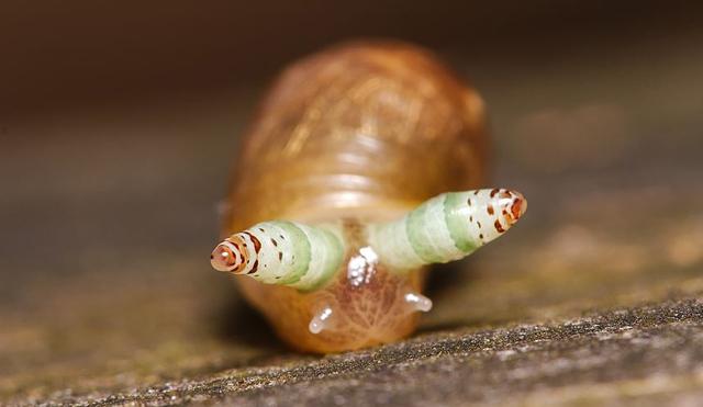 Emberi bőr paraziták képei - Rüh vagy bőrparaziták