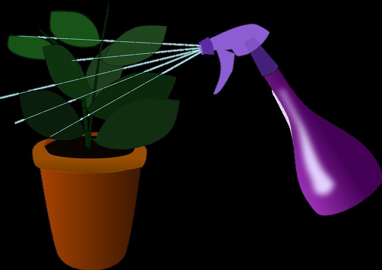 Szobanövényeink veszedelmes kártevői - Növényvédelem - Növénydoktor