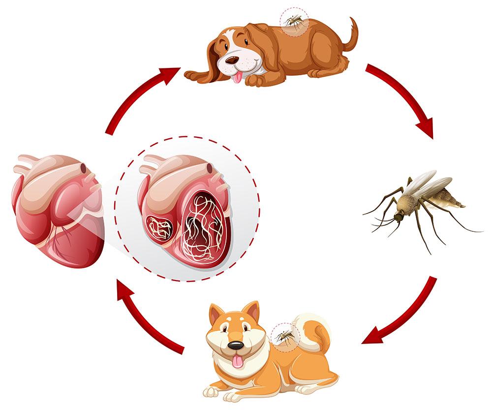 az állatok élősködésének megelőzése)