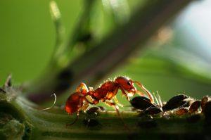 a hangyák elleni tudat ellenőrzése)