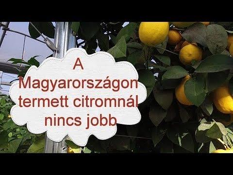 citrom kezelés a paraziták számára)