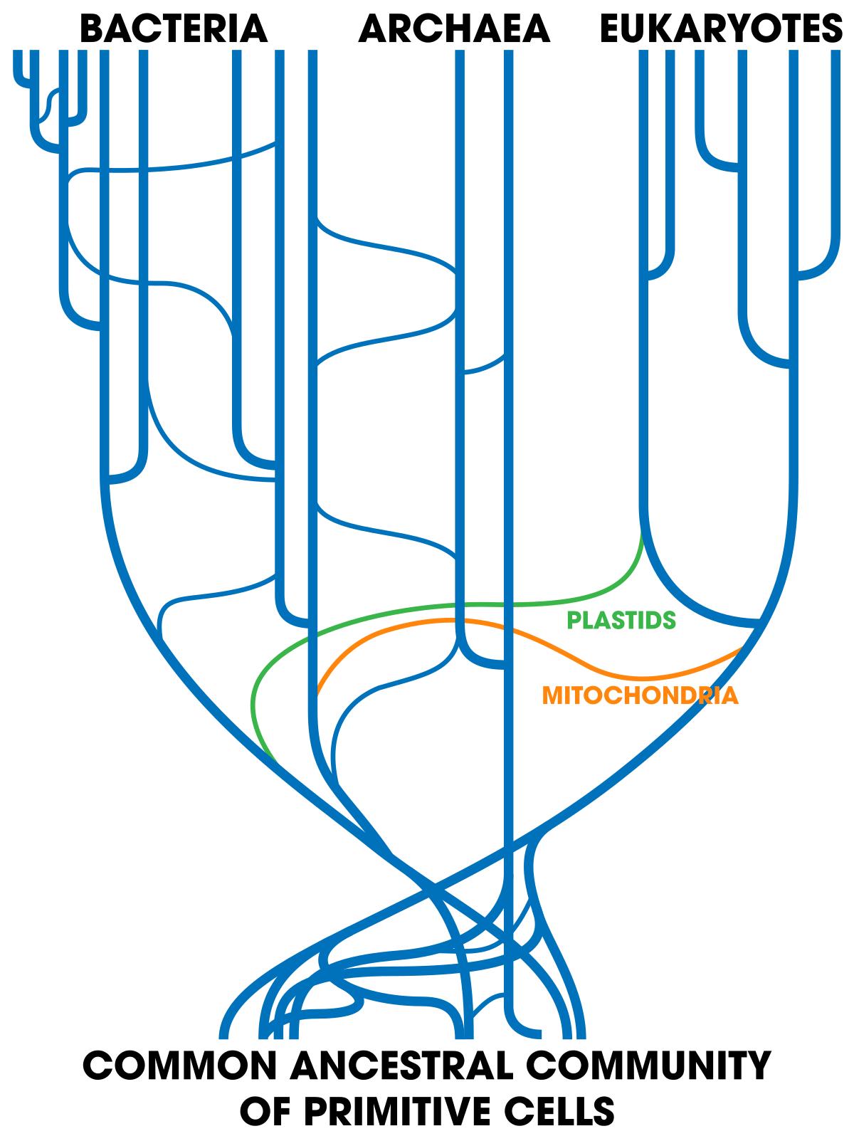 DNS baktériumok a kenet dekódolásában