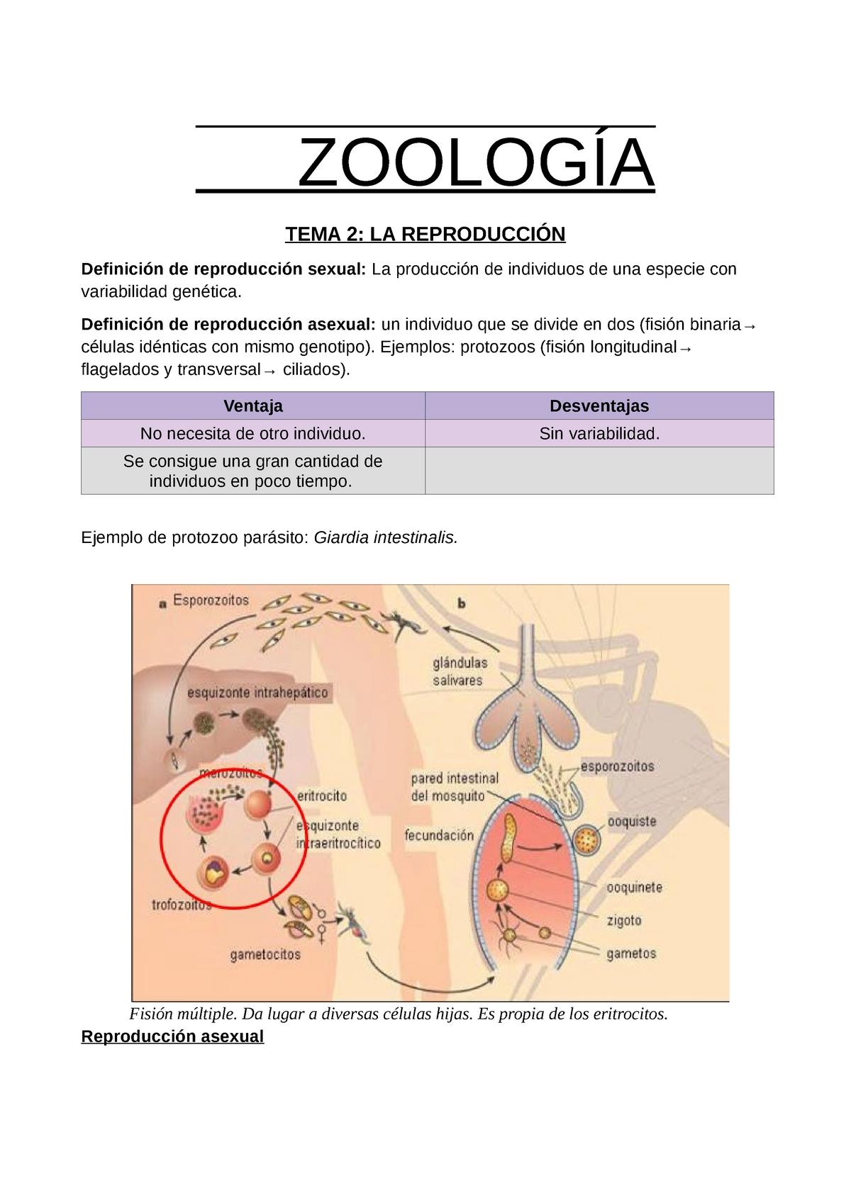 hogyan lehet elpusztítani a trichinellát