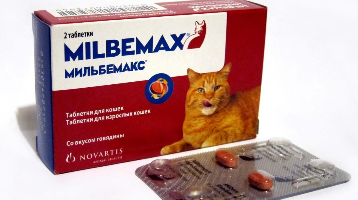 A macskák férgek elleni készítmények: tabletták, szuszpenziók és cseppek a marón