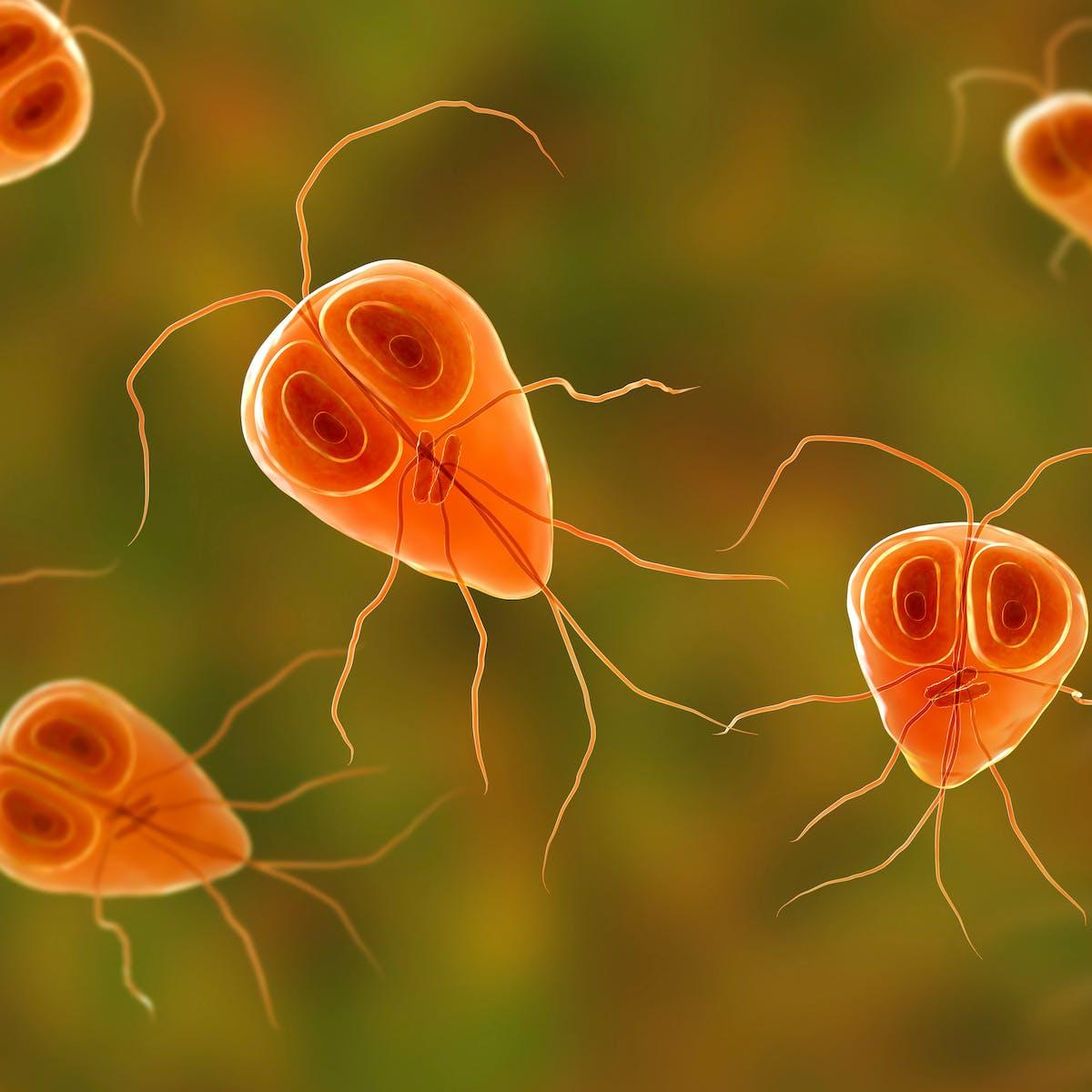 enterobiosis giardiasis