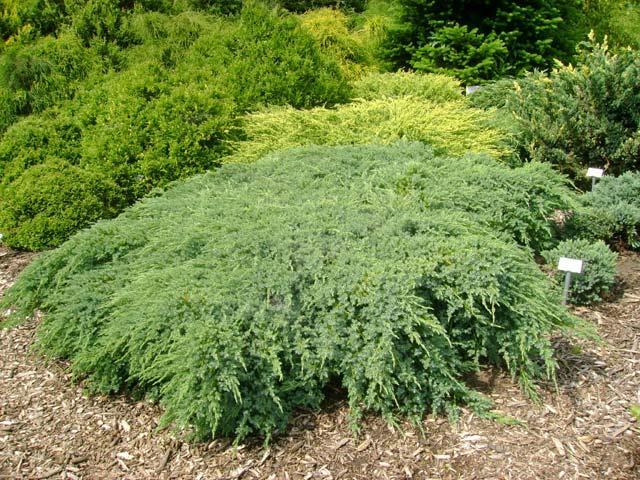 fű parazita elkerüli