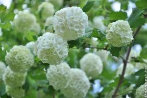 fehér paraziták a virágok