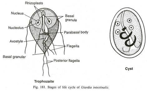 giardia joint pain