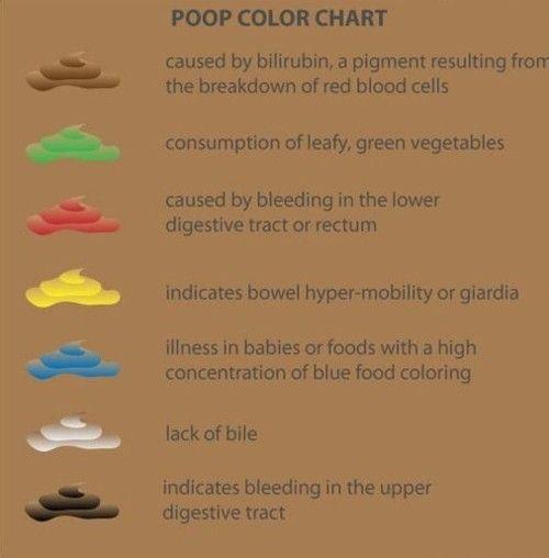 giardia poop color)
