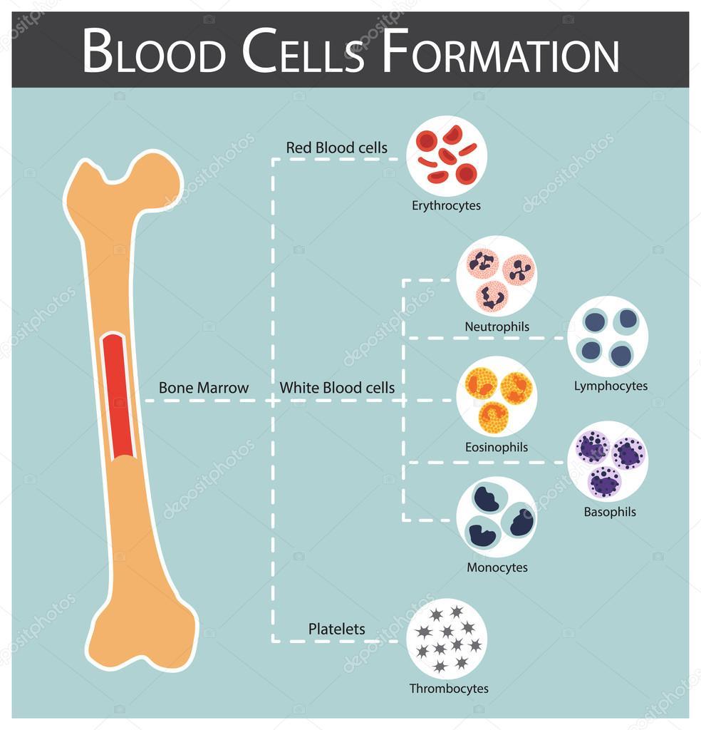 IgE vérvizsgálat: mi az és milyen indikációk - Allergének