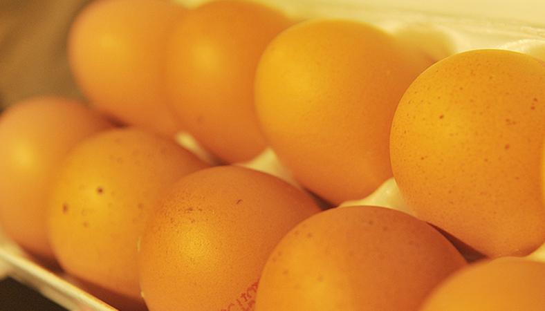 hogyan lehet megszabadulni a tojás helmintjaitól)