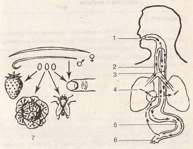 Kerekférgek: a típus rövid leírása - Tudomány | Március