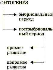 Melyek a kerekférgek szaporodásának és fejlődésének jellemzői)