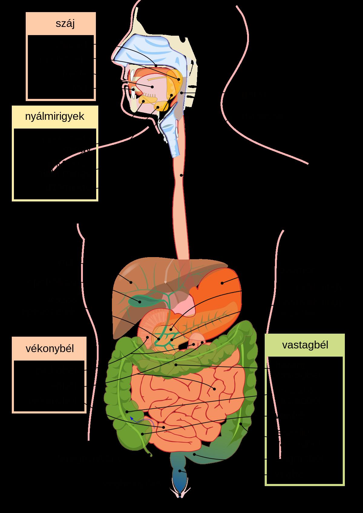 az emberi gyomor parazitái