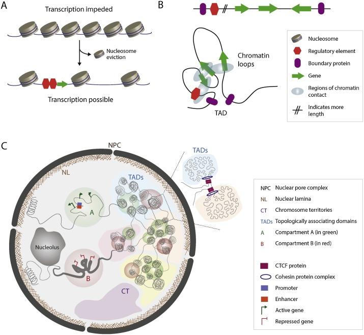 Plasmodium malária genom